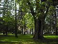 Park, ul. Nowoursynowska.JPG