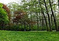 Park Olszyna park.JPG