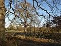 Parkland, Oakly Park - geograph.org.uk - 1122137.jpg