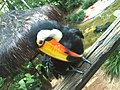 Parque das aves em foz de iguaçu no parana.jpg