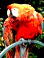 Parrot EGA palette.png