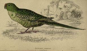 Parrots (Plate 29) (7977173862).jpg