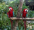 Parrots at Butterfly Park & Insect Kingdom, Sentosa 19.jpg