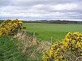 Pasture field - geograph.org.uk - 394828.jpg
