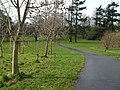 Path, McCauley Park - geograph.org.uk - 1196400.jpg
