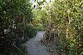 Pathway - Sundarban Biodiversity and Interpretation Area - Taki - North 24 Parganas 2015-01-13 4671.JPG