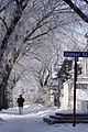Pedestrian, Frosted Trees and Quebec Street (2285839703).jpg