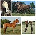 PferdeSilver.jpg