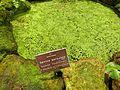 Pflanzen in den Gewächshäusern (5).jpg