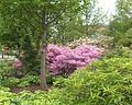 Phila Azalea Garden06.jpg