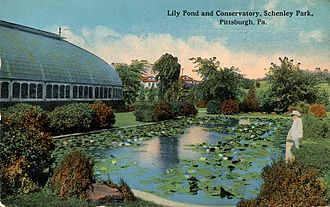 Phipps Conservatory and Botanical Gardens - A postcard postmarked 1915 illustrating the Aquatic Garden.
