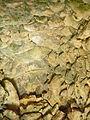 Phourni-elisa atene-3889.jpg