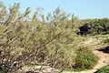 PikiWiki Israel 18976 Hasharon park.JPG