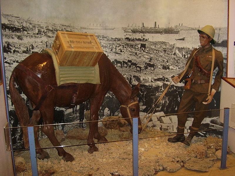 נהג פרדות במלחמת העולם הראשונה