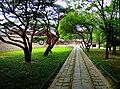 Pine trees of Jong-Myo - panoramio.jpg