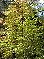 Pink Yellow Green Leaves (3020711529).jpg