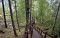 Plank road near Amur River, Aug 2019.jpg