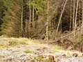Platform for shooting deer. - geograph.org.uk - 430820.jpg