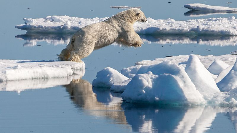 image of polar bear jumping from one ice flow to the next