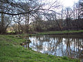 Pond by Squalls Lane, Ansty - geograph.org.uk - 360803.jpg