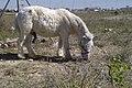 Pony Pisador (5068378740).jpg