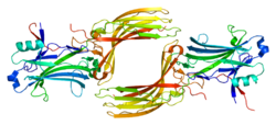 Protein ARRB1 PDB 1g4m.png