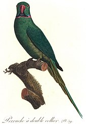 Illustration of a green parrot on a branch