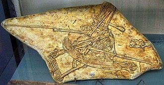 Pterodaustro - Fossil cast, Muséum national d'Histoire naturelle, Paris