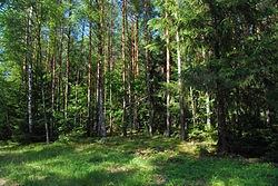 Puszcza augustowska landscape 01.jpg