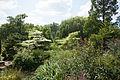 Queen Mary's Garden IMG 4426.jpg