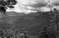 Queensland State Archives 442 Looking from Beechmont towards Lamington National Park Mount Hobwee Ships Stern Springbrook and Mount Warning New South Wales November 1933.png