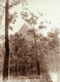 Queensland State Archives 5107 Mt Beerwah 1760 Ft from Blackall Rd c 1894.png