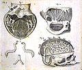 R. Lower, Tractatus de Corde, 1669 Wellcome L0020412.jpg