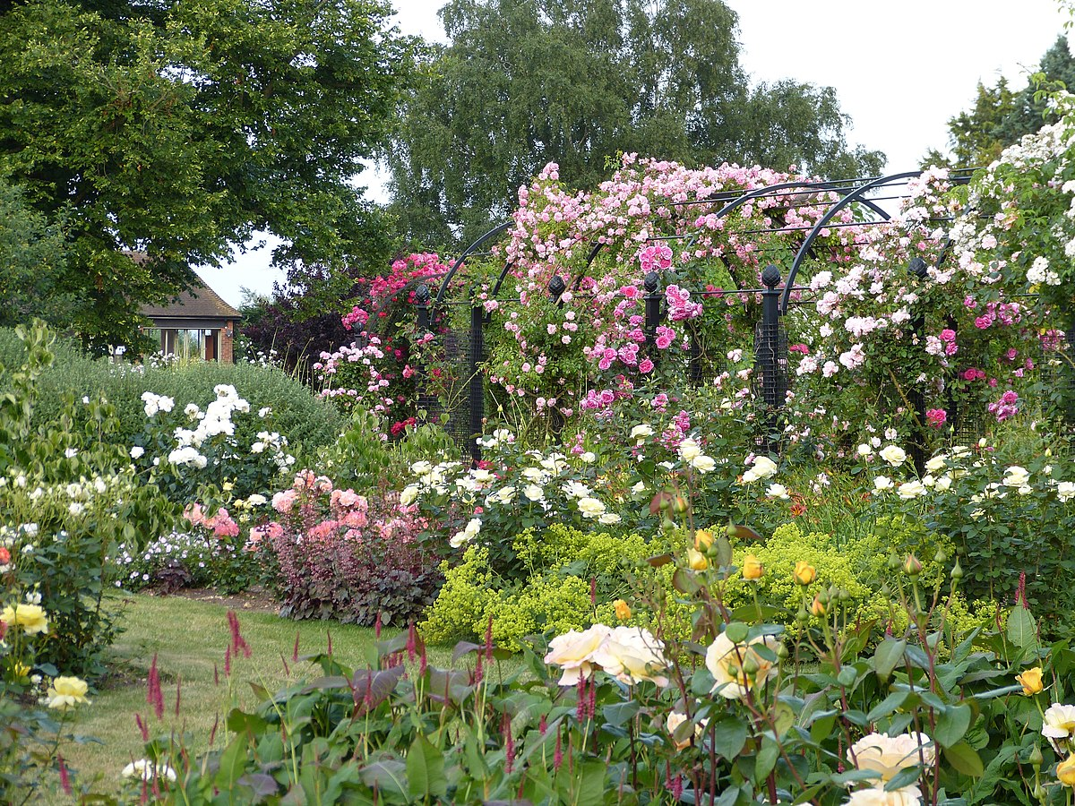 Roses In Garden: Royal National Rose Society