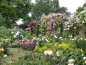 Royal National Rose Society - Royal National Rose Society Gardens in 2013
