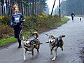 Racheal Bailey of Akna K9 Academy with two of her running dogs.jpg