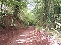 Red Cliff Holloway - geograph.org.uk - 57464.jpg