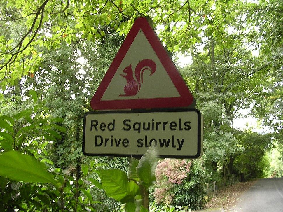 Red squirrels warning signs, Lake District