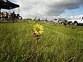 Rest Stop on the Tour de Braz (4696817553).jpg