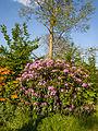 Rhododendrons (9055877839).jpg