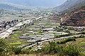 Rice fields in Paro, Bhutan.jpg