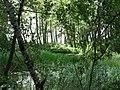 RiverIsland.jpg