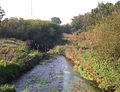 River Bollin - geograph.org.uk - 261542.jpg