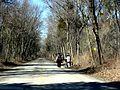 Road in Point Pelee National Park (4438464329).jpg