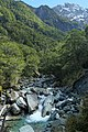 Rob Roy Stream through beech forest in Rob Roy Valley.jpg
