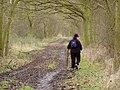 Roman road near Hobbs Cross, Essex - geograph.org.uk - 79231.jpg