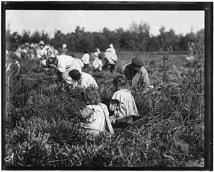 File:Rose Oquoto, 6 years old, and Flora Oquoto, 7 years old, of Philadelphia. Picking cranberries at Theodore Budd's Bog... - NARA - 523257.jpg