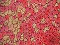 Rose Petal.jpg