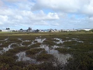 The suburb seen over the tidal flats surrounding it on most sides