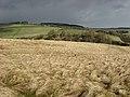 Rough grazing land - geograph.org.uk - 743448.jpg